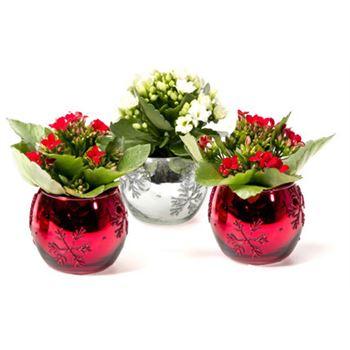 Mini Glass Red Ornament with Cyclamen  (Case: 24)