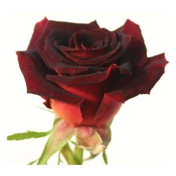 Sweetheart Rose Black Beauty