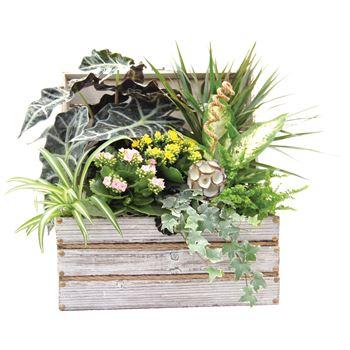 Indoor Garden Worthing Chest Large   (Pack 1)