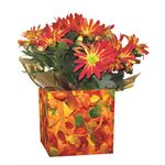 "Additional Images for 4"" Flowering Fall Leaves Gift Box Assorted Blooming  (Case 15)"