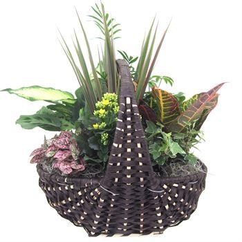 Indoor Garden  Empire EMPI504 (Pack 2)