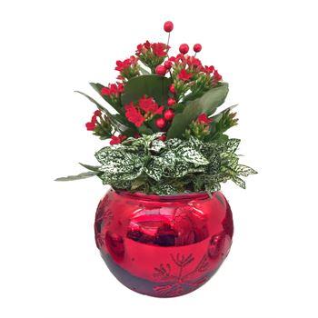 Indoor Gardens Glass Red (Case 8)