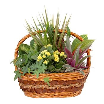 Indoor Garden Carter Wicker Medium  (Pack 2)