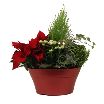 "11"" Poinsettia Planter    (Case: 2)"