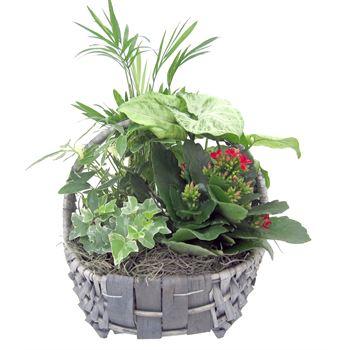Indoor Garden Costal CSTL501 (Pack 6)
