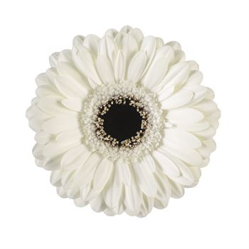 Gerbera Mini White