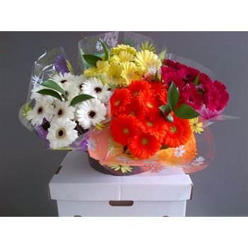 "Bouquet ""Everfresh"" 10 Stem Mini Gerbera in Displayer (Pack 12)"