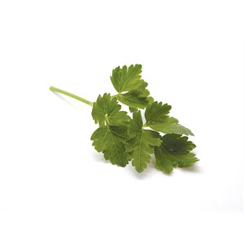 "4.5"" Herbs Organic Parsley Italian      (Case 15)"