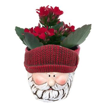 Santa Workshop- Kalanchoe (Case 24)