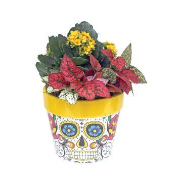 Indoor Garden DODE101 Day of the Dead (Pack 8)