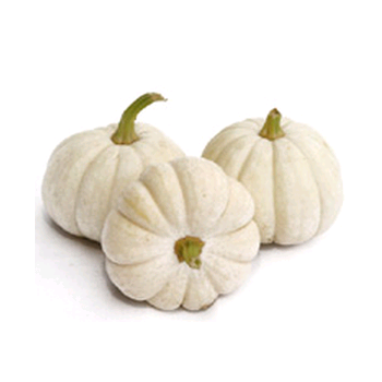Decorative Dried Accents Baby Boo Pumpkins - White