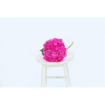 Hydrangea Local Hot Pink