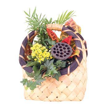 Indoor Garden Billings Small    (Pack 4)