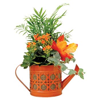 Indoor Garden Shelton Watercan Small   (Pack 8)
