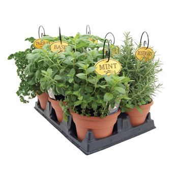 Potted Herbs & Veggies