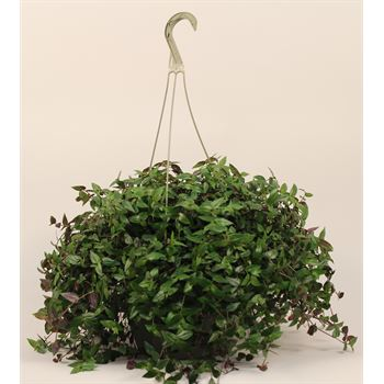 "10"" Hanging Basket Assorted  (Case 4)"