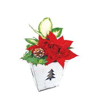 Indoor Garden Festive Medium  (Case 6)