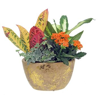 Indoor Garden Gold Flake Small     (Pack 6)