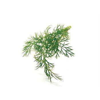 "4.5"" Herbs Organic Dill     (Case 15)"