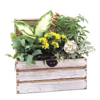 Indoor Garden Worthing Chest Medium   (Pack 2)