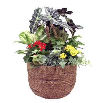 Indoor Garden Luxx Large    (Pack 2)