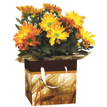 "4"" Flowering Fall Leaves Gift Box Mum/Gerb/Cyc Only  (Case 15)"