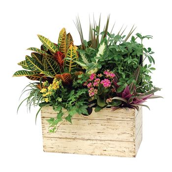 Indoor Garden Portage Chest Large   (Pack 1)