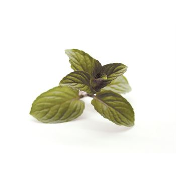 "4.33"" Herbs      Mint  Peppermint   (Case 10)"