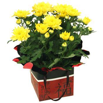 """4"""" Mum in Chinese New Year Gift Box   (Case 15)"""