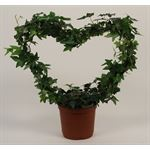 """Additional Images for 6"""" Ivy Heart  (Case 8)"""