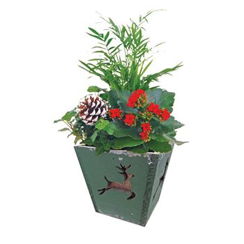 Indoor Garden Festive  Small FEST301 (Pack 12)