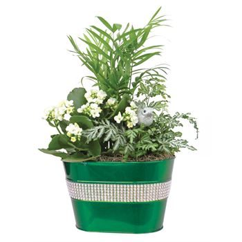 Indoor Garden Glamour Tin Oval Small (Case 6)