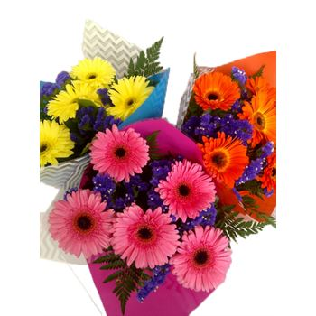 "Bouquet ""Everfresh"" Gerbera/Statice Upgrade (Pack 5)"