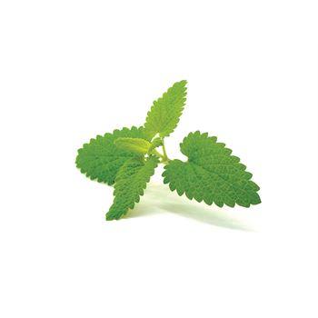 "4.33"" Herbs     Catnip - Not Organic   (Case 10)"