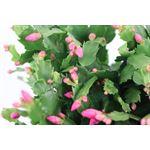 """Additional Images for 8"""" Zygo Cactus Pan Premium  (Case 6)"""
