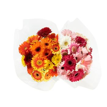 Bouquet 18 Stem Mini Gerbera Mosaic (Pack 8)