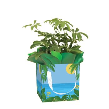 Assorted Tropicals in Giftbox   (Pack 15)