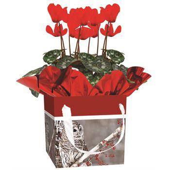 Indoor Garden Holiday Assorted Giftbox (Mum/Cyc/Gerb)   (Case 15)