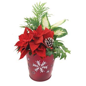 Indoor Gardens Merry Christmas MERY202 (Case 6)