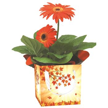 "4"" Flowering Fall Leaves Gift Box Assorted Blooming  (Case 15)"