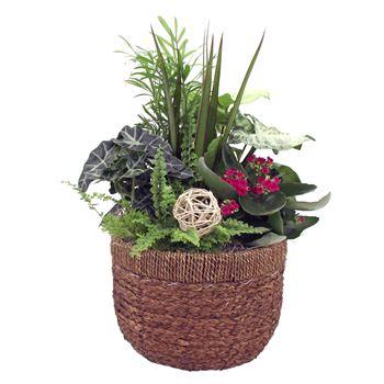 Indoor Garden Luxx Medium    (Pack 3)