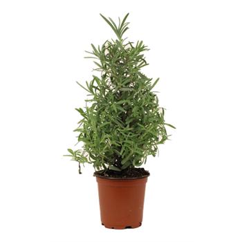 "4"" Lavender Christmas Tree                     (Case 18)"