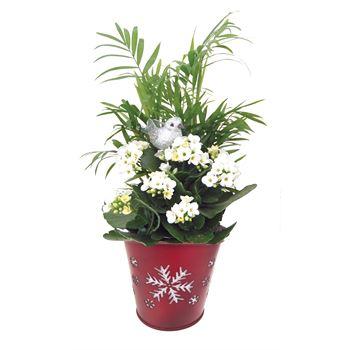 Indoor Gardens Merry Christmas MERV201 (Case 8)