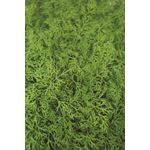 """Additional Images for 4.5"""" Herbs Organic Dill     (Case 15)"""