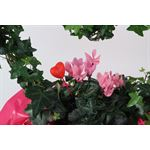 """Additional Images for 7"""" Ivy Heart with Cyclamen, Mylar and Pick   (Pack 6)"""