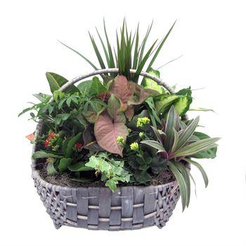 Indoor Garden Costal CSTL505 (Pack 1)