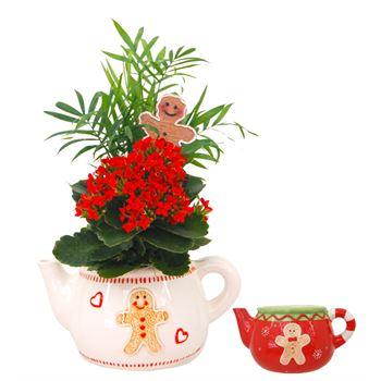 Indoor Gardens Cookie Teapot (Case 6)