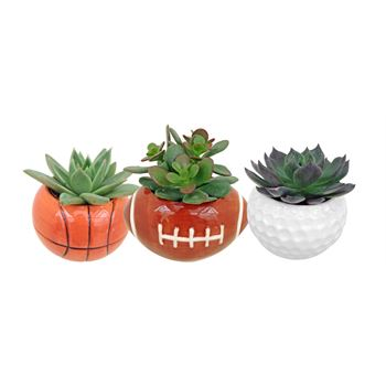 Dad Sports Mini- SPOR101 with Succulents (pack 18)