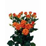 Additional Images for Rose Spray Local Orange