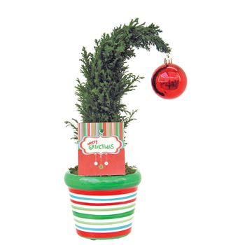 "Indoor Gardens Grinchmas Tree ""Phyto"" (Case 12)"